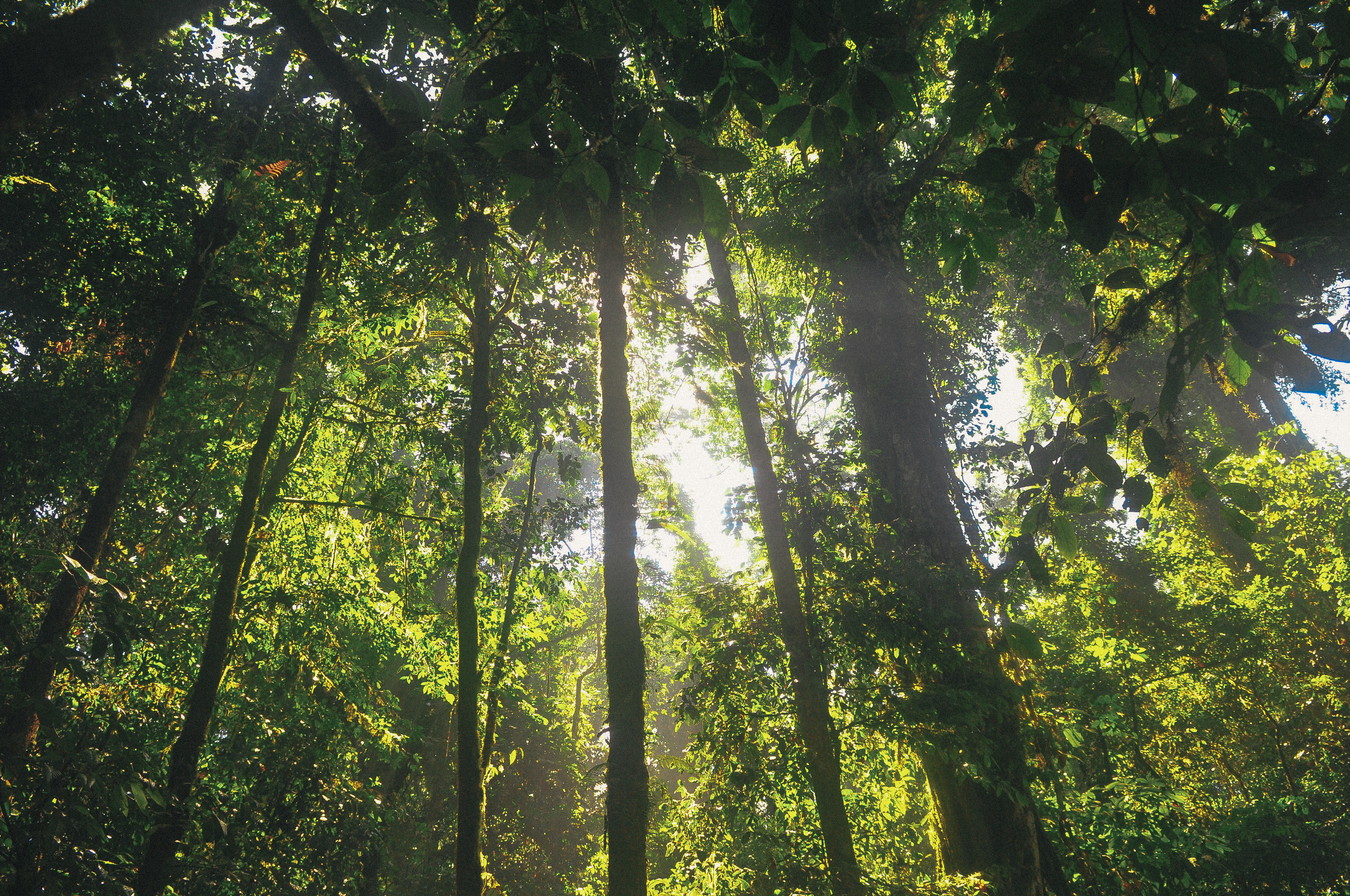 Jungle Trees With Lots Of Green And Bright Sun